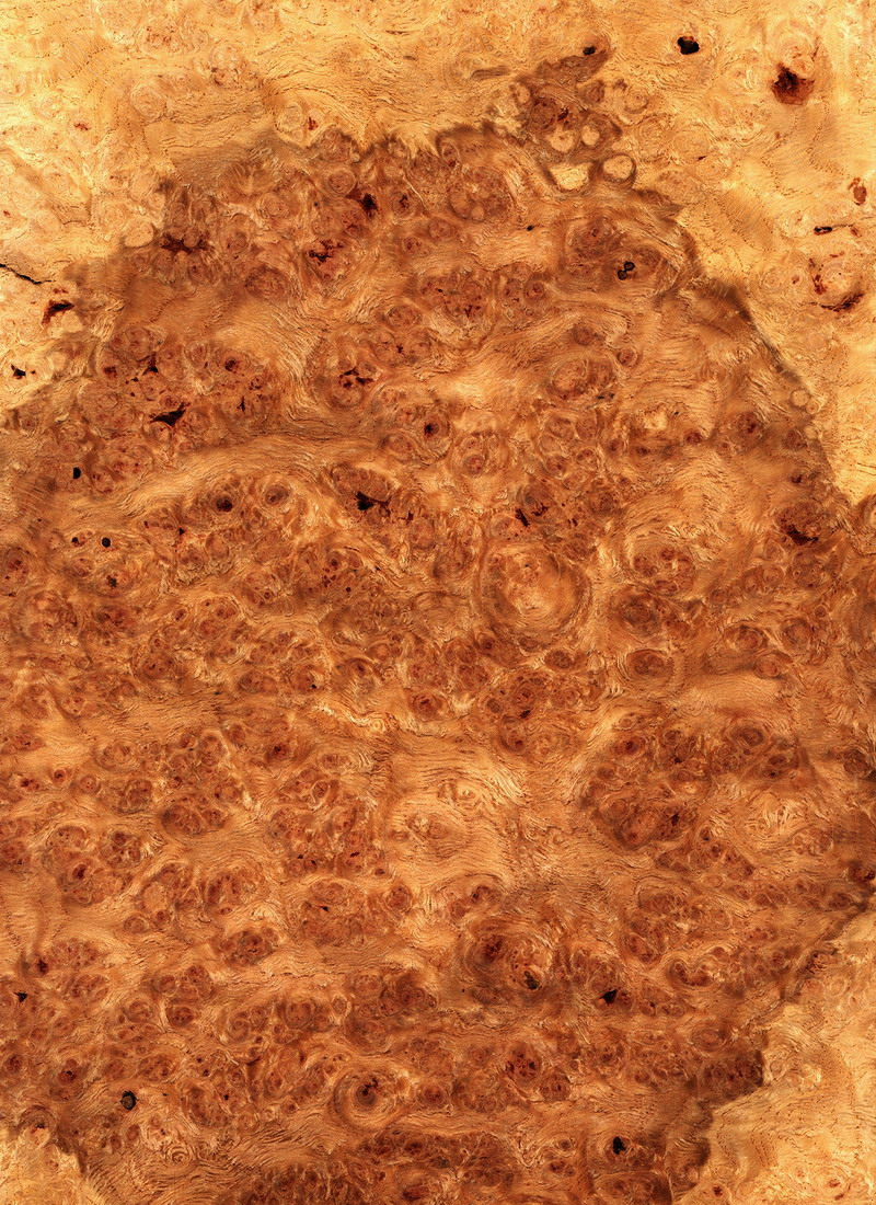 OAK ENGLISH BROWN BURL