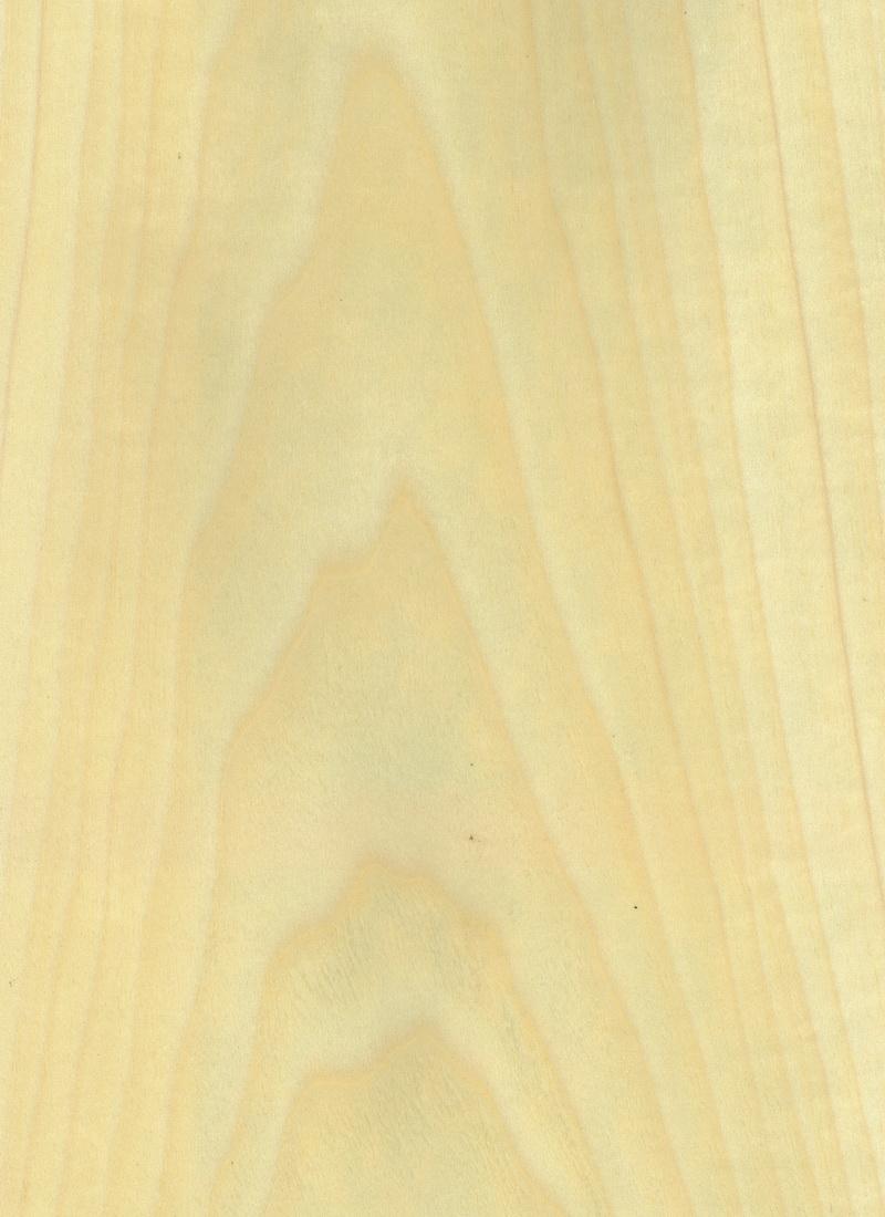 POPLAR WHITE
